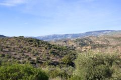 Aerial view of mountains and olive groves. Aerial view of olive groves on sandy hills with mountains and under a blue cloudy sky in Andalucia Spain Royalty Free Stock Images