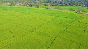 Aerial View Moving down to Rice Field against Rails Forest. Aerial view moving down to separated rice fields against railroad with bridge and beautiful forest stock video footage