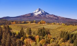 Aerial view of Mt Hood with a fruit orchard in the foreground on an autumn day just after sunrise looking south towards the mounta royalty free stock photos