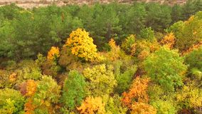 AERIAL VIEW. Multicolored Trees In Park In Autumn. AERIAL VIEW. This is a downward shot of many trees in lush multicolored foliage at autumn time stock video footage