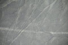 Aerial view of Nazca Lines - Dog geoglyph, Peru. Stock Photo