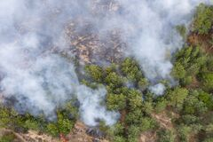 Free Aerial View Of A Fire In A Pine Forest. Disaster Filming By Drone Stock Photography - 184246592