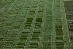 Free Aerial View Of Agricultural Parcels With Furrows And Green Lands In Spring Shot With Royalty Free Stock Photography - 169178117
