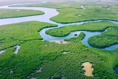 Free Aerial View Of Amazon Rainforest In Brazil, South America. Green Forest. Bird`s-eye View Stock Image - 179525881