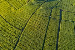 Free Aerial View Of Green Corn Field In Countryside Stock Photo - 137194970