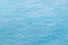 Free Aerial View Of Lonely Swimmer Swimming In The Sea Stock Images - 166775864