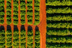 Free Aerial View Of Orange Grove Farm Field Stock Photography - 145145692