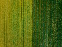 Aerial View Of Rows Of Potato And Rapeseed Field. Yellow And Green Agricultural Fields In Finland. Stock Photos