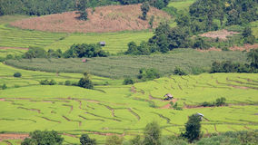 Free Aerial View Of Terraced Rice Fields With Houses Stock Images - 27600144