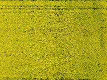 Aerial View Of Yellow Rapeseed Field A Spring Day Royalty Free Stock Photography