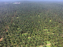 Aerial view of oil palm plantation Royalty Free Stock Photo