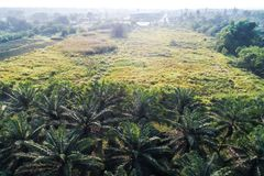 Aerial view of oil palm tree plantation field royalty free stock photos