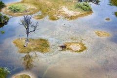 Aerial view Okavango Delta with Hippo Stock Photo