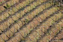 Old Italian vineyard in winter - Trentino Italy Europe. Aerial view of an old Italian vineyard in winter. Trentino Alto Adige, Italy, Europe royalty free stock images