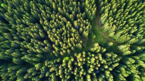 Free Aerial View On The Summer Forest. Beautiful Natural Landscape From Air. Stock Image - 135040741