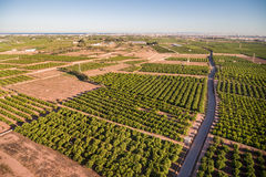 Aerial view of orange fields in Valencia, dusk Stock Photography