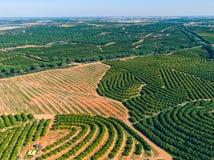 Aerial View Orange Trees Plantation Stock Photos