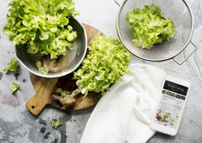 Aerial view of organic green oak salad vegetable Royalty Free Stock Photos