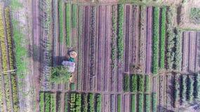Aerial view of organic vegetable farm stock photo