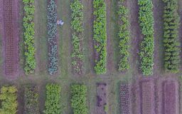 Aerial view of organic vegetable farm Royalty Free Stock Photo
