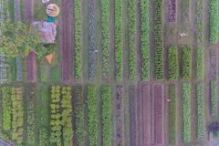 Aerial view of organic vegetable farm Stock Photos
