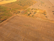 Aerial view of Outback Cattle mustering Stock Photos