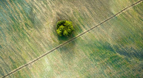 Aerial view over agricultural beveled fields, diagonal road and tree Stock Photography