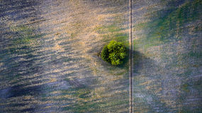Aerial view over agricultural beveled fields, road and tree Stock Photos
