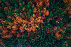 Aerial view over autumn forest.  Stock Photo
