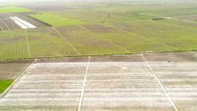 Aerial view over field of crop, premature royalty free stock images
