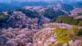 Aerial view over flowered forest Royalty Free Stock Image