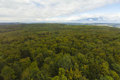 Aerial view over a forest Stock Image