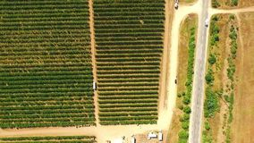 Aerial View Over Fruit Orchard stock video footage