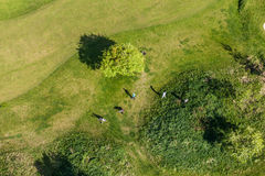 Aerial view over golf field Royalty Free Stock Image