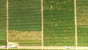 Aerial View Over Green Fruit Orchards stock video
