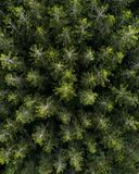 Aerial view over a pine tree forest. stock image