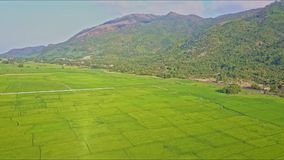 Aerial View Over Rice Field Landscape with Road by Mountains. Aerial view over green rice field landscape with country road by rails against large forestry stock video footage