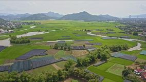 Aerial view over rice fields trees lakes river. Aerial view over green rice fields trees lakes river and houses against distant mountains and clear blue sky stock video