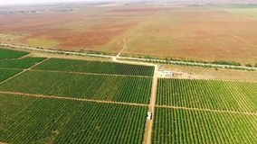 Aerial View Over Standard Fruit Gardens stock video
