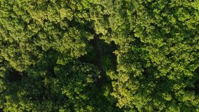 Aerial view over summer forest in morning