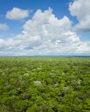 Jungle Canopy View Stock Photography