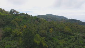 Aerial view over the tropical forest. With palm tree stock video footage