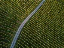 Aerial view over vineyard fields. In Europe royalty free stock images