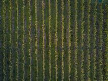 Aerial view over vineyard fields. In Europe royalty free stock photos