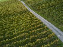 Aerial view over vineyard fields. In Europe royalty free stock photography