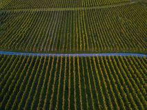 Aerial view over vineyard fields. In Europe stock photos