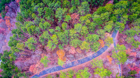 Aerial view over wooded forest and road Royalty Free Stock Photography