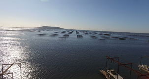 Aerial view of an oyster field in the south of France stock video