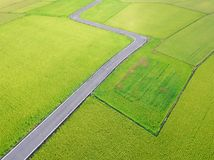 Aerial View of Paddy Field from Dongshan Township, Yilan, Taiwan. Shot in Dongshan Township, Yilan, Taiwan royalty free stock image