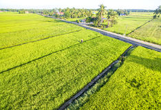 Aerial view paddy field Royalty Free Stock Images